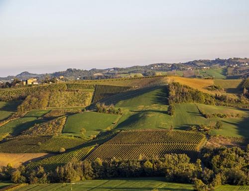 Le colline del Piacentino
