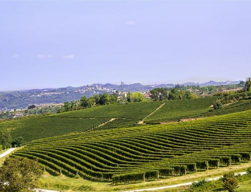 Tra Langhe e Monferrato: sapiente coltura della vite, paesaggi e castelli
